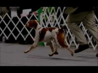 Введение в собаковедение 101 Dogs Часть 11 Animal Planet