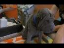 Введение в собаковедение 101 Dogs Часть 2 Animal Planet
