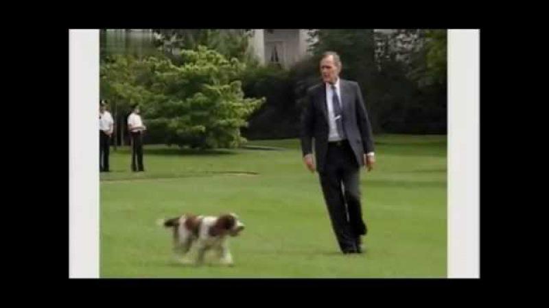 Введение в собаковедение 101 Dogs Часть 9 Animal Planet