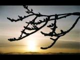 Коротин Валерий - Обломанная ветка