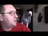Попугай разговаривает с хозяином
