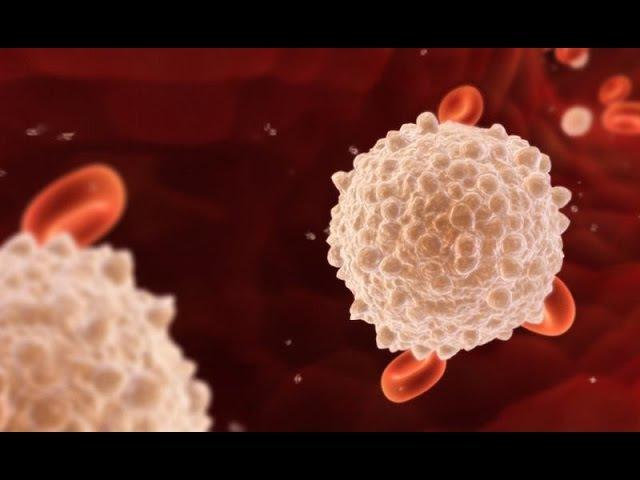 10. Кровеносная система - кровь (8 класс) - биология, подготовка к ЕГЭ и ОГЭ