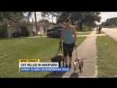 Две бродячие собаки убили кошку во дворе дома в Сан-Карлос Парке. Флорида.