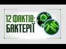 12 фактів про бактерії: цікава інформація про їх значення для людини