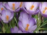 Acker Bilk - Petite Fleur.mpg.AVI