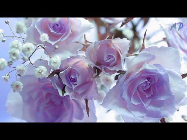 Blue Are The Dreams - OCARINA