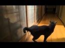 Смешные коты и кошки - Кот стучит в дверь задней лапой!