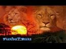 MUSICA RELAX AFRICANA, SABANA AFRICANA, RELAJANTE, RELAXING MUSIC, AFRICA