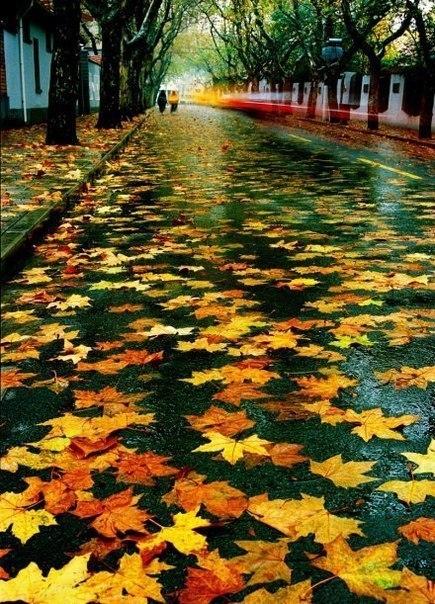 Жовте листя клена