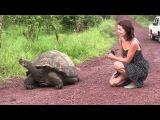 Галапагосские острова: Видео Привет