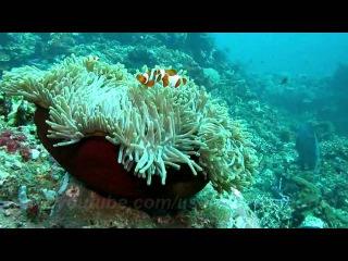 Музыка моря, обитатели теплых вод Индийского океана ч2