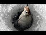 Зимняя ловля леща на водохранилище.Секреты экспертов.