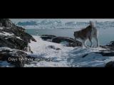 Белый плен (2006) КиноКрапка