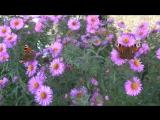 Бабочки в цветах. Очень красиво!