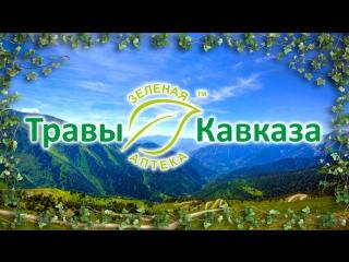 Травы Кавказа - Зеленая аптека, г. Горячий Ключ - целебные травы и сборы