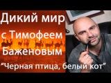 Дикий мир с Тимофеем Баженовым.