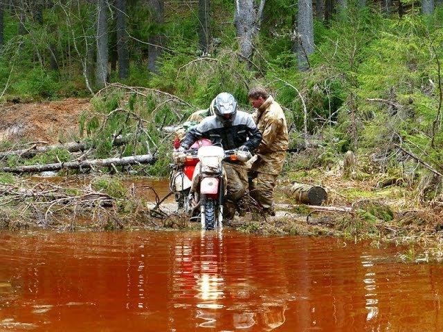 Тайны Вепсского леса