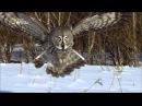 Дикие животные Севера: Зов природы