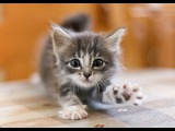 Funny Cat & Cute Kittens Fail Videos   The Best Funny Kitty Cat Video № 16 | Morsomme Katter № 16