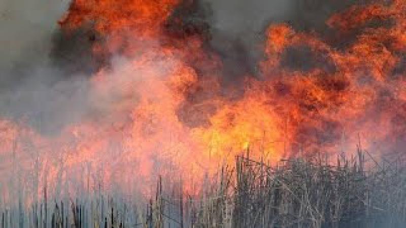Волонтеры. Игра с огнем / Volunteers. Playing with Fire