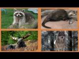 Учим лесных животных - Развивающие видео для самых маленьких