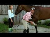 8 упражнений на растяжку для лошади