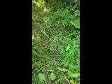 > редчайшие кадры спаривания арахнид