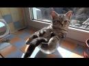 Очень смешные видео про кошек