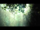 Rainy Dream - video designed by dreamscene.