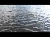 ХМАО. СЕВЕРНАЯ СОСЬВА. ТРОФЕЙНАЯ ЩУКА.(русская рыбалка)