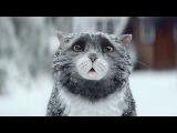 Ролик про Рождественского кота