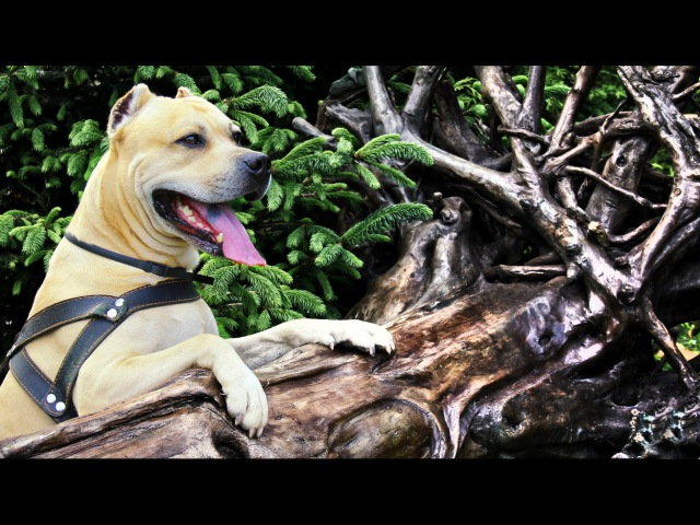 TreT - The Best Lover (Parkour Dog From Ukraine)