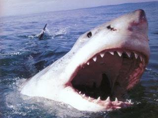 Документальный фильм.Укус акулы. Интересный документальный фильм.