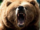 Смотреть всем!!! Долина Гризли - поле битвы. Документальный фильм про медведей гризли