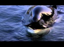 Michael Jackson - Will You Be There (Free Willy)