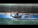 Дельфинарий на Крестовском в СПб. Дельфин танцует.