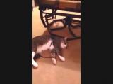 Кот притворщик порвал ютуб_HD