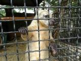 Попугаи и носухи Сафари парка львов  Тайган