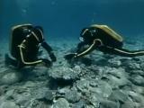 В поисках Атлантиды. Подводная одиссея команды Кусто (часть 1)
