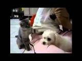 прикольные собаки видео, смешные видео про собак