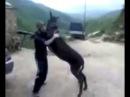 Дагестанский прикол - Танец с ослом