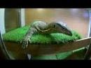 Жизнь с холодной кровью Выставка рептилий (Гранд Каньон)