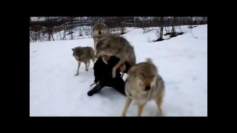 и Волки помнят добро!