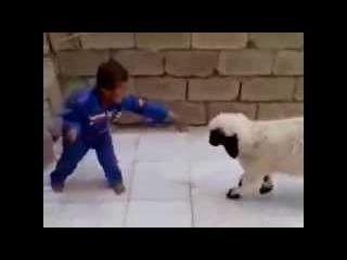 Sevimli Çocuk Çılgın Kuzu İle Kavga Ederken Çok Komik