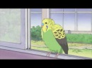 Nichijou Parakeet