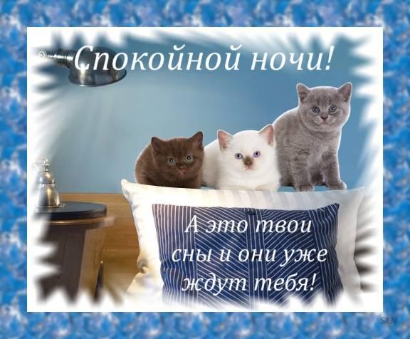 http://cs627528.vk.me/v627528206/48c8a/rAEBdGdgunQ.jpg
