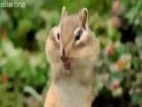 прикольная озвучка животных с BBC)))