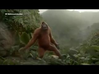 Танец обезьян fun приколы про обезьян