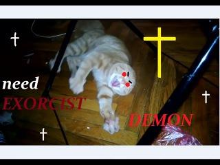приколы с животными!смешные животные! смотреть онлайн!топ подборка!