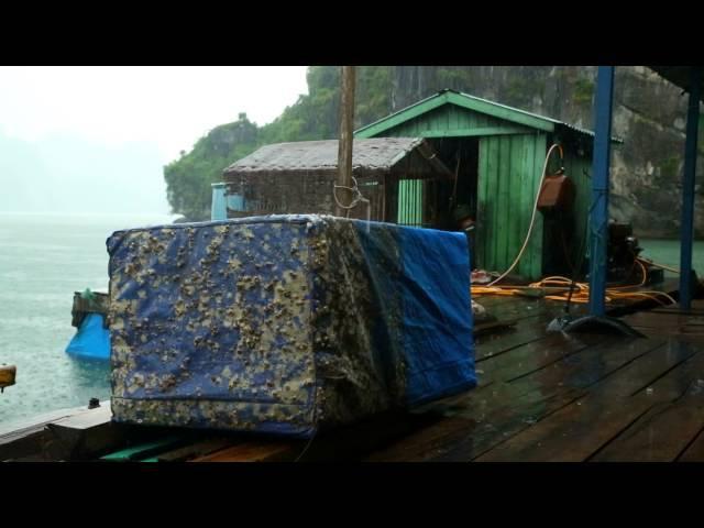 Мир наизнанку. S04E14. Vietnam
